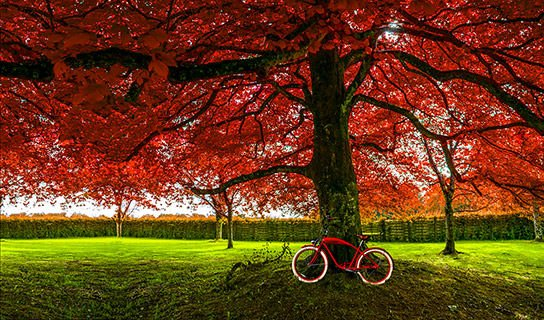 Red Tree red bike
