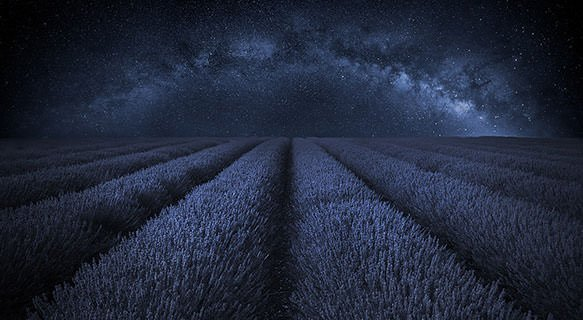 Lavender and milky way