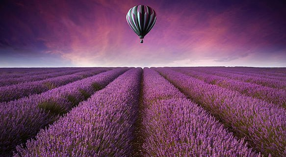 Lavender in the air